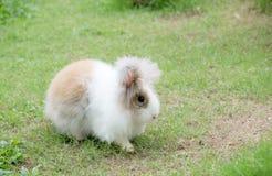 兔子坐草甸 关闭在绿色背景的兔宝宝 库存照片
