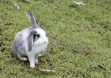 兔子坐草 库存图片