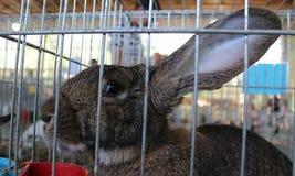 兔子头在笼子的 库存照片