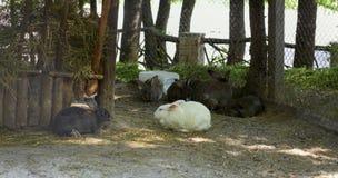 兔子家庭在风雨棚的 库存图片