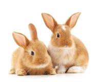 兔子小二 图库摄影