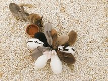 兔子小组 免版税库存图片