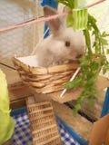 兔子我逗人喜爱的兔宝宝 库存照片