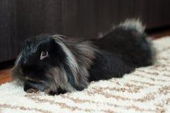 兔子放松 免版税库存图片