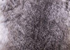 兔子灰色纹理背景材料的毛皮关闭 图库摄影