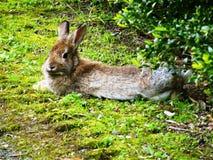 兔子甜点 免版税库存图片