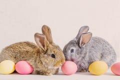 兔子用在白色背景的复活节彩蛋 库存照片