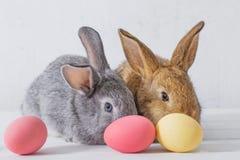 兔子用在白色背景的复活节彩蛋 免版税库存照片