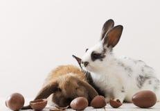 兔子用在白色背景的朱古力蛋 免版税库存照片
