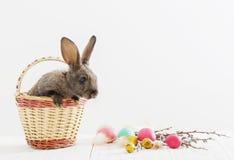 兔子用复活节彩蛋 免版税库存图片