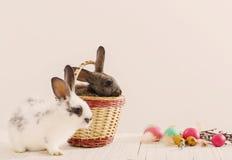 兔子用复活节彩蛋 免版税库存照片