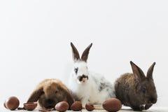 兔子用朱古力蛋 库存照片