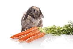 兔子用红萝卜 免版税库存图片