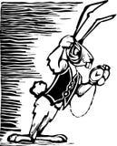兔子白色 免版税库存照片