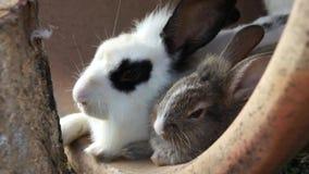 兔子的母亲和儿子 免版税库存照片