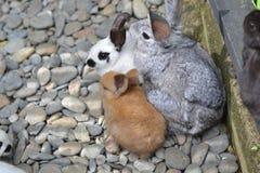 兔子的汇集 免版税库存图片