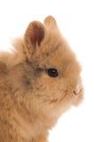 兔子的甜表面 库存图片