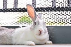 兔子看 免版税库存照片