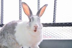 兔子看 库存图片