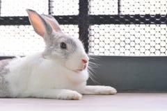 兔子睡觉 免版税图库摄影