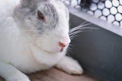 兔子睡觉 免版税库存图片