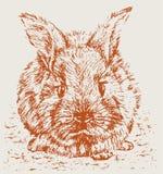 兔子红色 库存图片
