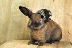 兔子红褐色的颜色 免版税库存图片