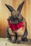 兔子红褐色的颜色 免版税图库摄影