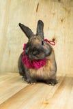 兔子红褐色的颜色 免版税库存照片