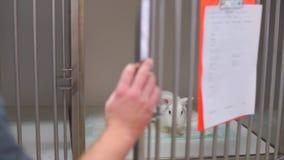 兔子被关进了笼子 股票录像
