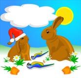 兔子鹦鹉红萝卜 库存照片