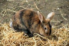 兔子,一只兔子在他的封入物在夏天 免版税库存图片