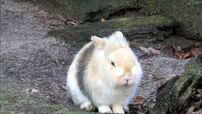兔子,矮小的兔宝宝,外部,复活节 股票录像