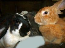 兔子-兔宝宝 免版税库存图片