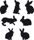 兔子 库存照片