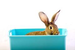 兔子 免版税库存照片
