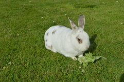 兔子 库存图片