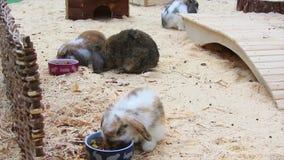 兔子 股票视频