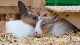 兔子 股票录像