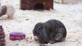 兔子 影视素材