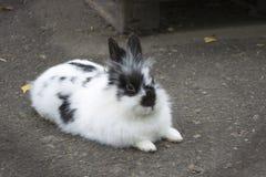 兔子 图库摄影