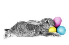 兔子CMYK 库存照片
