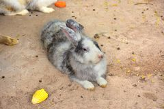 兔子cuties 免版税库存照片