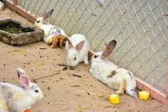 兔子cuties 库存照片