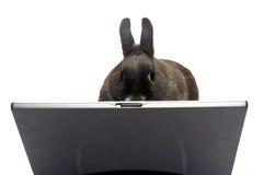 兔子Web站点管理员 免版税库存图片