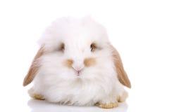 兔宝宝一点 图库摄影