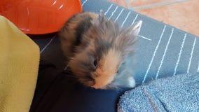 兔宝宝一点 库存照片