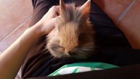 兔宝宝一点 免版税库存图片