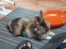 兔宝宝一点 免版税库存照片