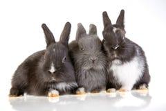 兔宝宝三 库存照片